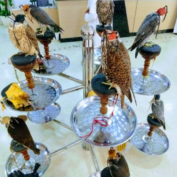 Hospital for Falcons in Doha